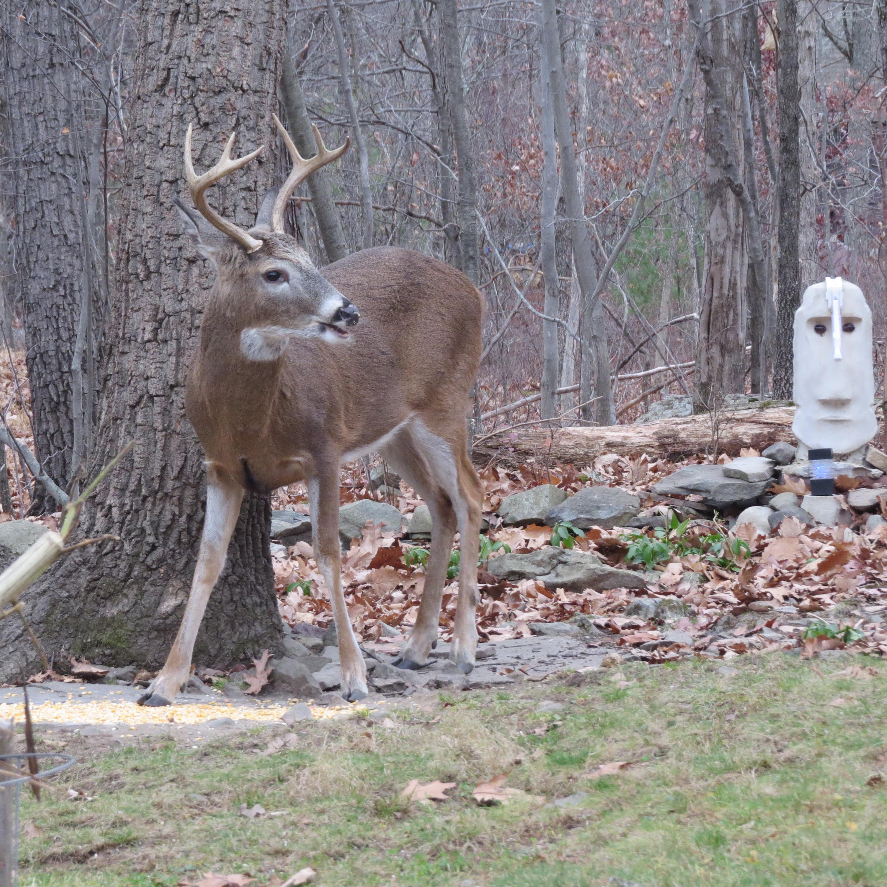 Deer Mating Season | harmonicimagery's Blog